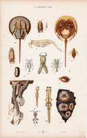 Tőrfarkú rák, vízibolha, haltetű és rák, languszta, litográfia 1885, eredeti, 26 x 42 cm, nagy méret