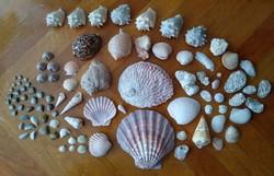 Tengeri kagyló és csiga gyűjtemény