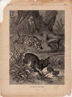 A jaguár és tapor harca, fametszet 1881, metszet, nyomat, 22 x 30 cm, Ország - Világ, újság, tapír