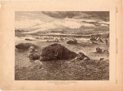 Üldözött bölénycsorda a Missouriban, fametszet 1881, metszet, nyomat, 22x30, Ország - Világ, indián