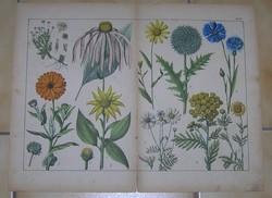 Virágok litográfia színes nyomat