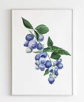 Áfonya, akvarell, 28x38