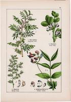 Indigó, lednek, lencse és szarvaskerep, réti here, lucerna, litográfia 1895, 17 x 25 cm, növény