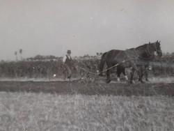 Régi fotó vintage férfi fénykép földművelés szántás lovakkal 2 db