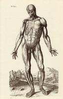 Az emberi test 3., anatómia, izom, koponya, egyszín nyomat 1978, 28 x 44 cm, nagy méret, fakszimile
