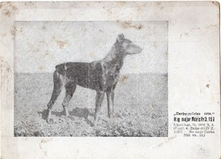 1926 derbygyőztes dobermann