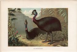 Sisakos kazuár, litográfia 1894, színes nyomat, eredeti, német, Brehm, állat, madár, Ausztrália