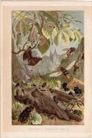 Bogár, pillangó, hernyó, litográfia 1894, színes nyomat, eredeti, német, Brehm, állat, lepke, szárny