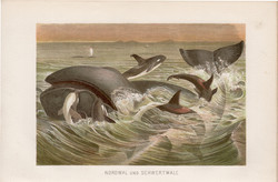 Bálna és delfin, litográfia 1894, színes nyomat, eredeti, német, Brehm, állat, tenger, óceán, emlős