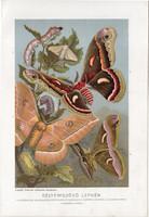 Selyemlepke, litográfia 1907, színes nyomat, eredeti, magyar, Brehm, állat, lepke, hernyó