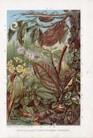 Mimikri, litográfia 1907, színes nyomat, eredeti, magyar, Brehm, állat, utánzó, rovar, szín, alak