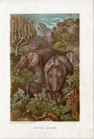 Afrikai elefánt, litográfia 1907, színes nyomat, eredeti, magyar, Brehm, állat, Afrika, ormány