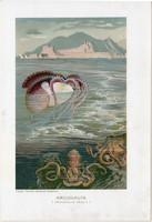 Argonauta, litográfia 1907, színes nyomat, eredeti, magyar, Brehm, állat, polip, óceán, tenger