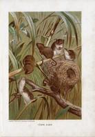 Törpe egér, litográfia 1907, színes nyomat, eredeti, magyar, Brehm, állat, rágcsáló, Európa, Ázsia
