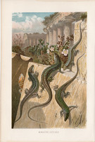 Fali gyík, litográfia 1894, színes nyomat, eredeti, német, Brehm, állat, hüllő, Európa, Ázsia