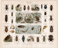 Bogarak, litográfia 1886, színes nyomat, eredeti, német nyelvű, bogár, régi, lexikon melléklet