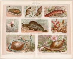 Csigák, litográfia 1888, német nyelvű, eredeti, színes nyomat, erdő, csiga, lexikon melléklet
