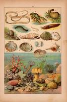 Állatok (24), litográfia 1902, eredeti, kis méret, magyar, állat, rák, csiga, kagyló, korall, sepia