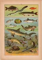 Állatok (21), litográfia 1902, eredeti, kis méret, magyar, állat, hal, ponty, tőkehal, cápa, csuka