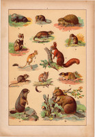 Állatok (7), litográfia 1902, eredeti, kis méret, magyar, állat, mókus, patkány, hód, vakond, pele