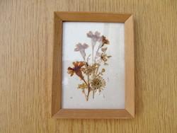 Kézzel készült igazi virágnyomat (szignált, 13x15cm, német, üvegezett)