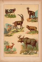 Állatok (13), litográfia 1902, eredeti, kis méret, magyar, állat, kecske, jzuh, elenszarvas, zerge