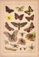 Állatok (23), litográfia 1902, eredeti, kis méret, magyar, állat, lepke, pillangó, pók, kullancs
