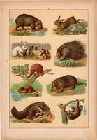 Állatok (8), litográfia 1902, eredeti, kis méret, magyar, állat, nyúl, sül, hangyász, lajhár
