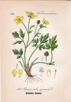 Kúszó boglárka, litográfia 1882, eredeti, kis méret, színes nyomat, növény, virág, Ranunculus