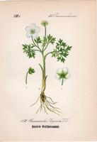 Ranunculus seguieri, litográfia 1882, eredeti, kis méret, színes nyomat, növény, virág, boglárka
