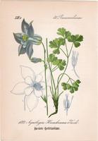 Feketéllő harangláb, litográfia 1882, eredeti, kis méret, színes nyomat, növény, virág, Aquilegia