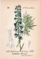 Delphinium hybridum, litográfia 1882, eredeti, kis méret, színes nyomat, növény, virág, sarkantyúfű