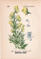 Méregölő sisakvirág, litográfia 1882, eredeti, kis méret, színes nyomat, növény, virág, Aconitum an.