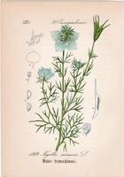 Kandilla, litográfia 1882, eredeti, kis méret, színes nyomat, növény, virág, Nigella arvensis