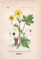 Berki boglárka, litográfia 1882, eredeti, kis méret, színes nyomat, növény, virág, Ranunculus