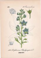 Csípős sarkantyúfű, litográfia 1882, eredeti, kis méret, színes nyomat, növény, virág, Delphinium