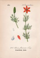Lángszínű hérics, litográfia 1882, eredeti, kis méret, színes nyomat, növény, virág, Adonis flammea