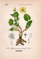 Salátaboglárka, litográfia 1882, eredeti, kis méret, színes nyomat, növény, virág, Ficaria ranuncul.