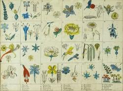 1C502 Régi keretezett akvarellel színezett növények virágjai litográfia 25 x 33 cm