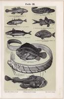 Halak III. és IV., színes nyomat 1894, német nyelvű, eredeti, litográfia, hal, makréla, csikóhal