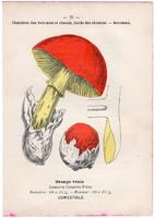 Császárgomba és késői laskagomba, litográfia 1895, eredeti, kis méret, gomba, színes nyomat