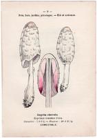 Gyapjas tintagomba és ízletes vargánya, litográfia 1895, eredeti, kis méret, színes nyomat, gomba