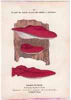 Májgomba és laskapereszke, litográfia 1895, eredeti, kis méret, gomba, színes nyomat