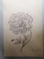 Kluge Károly - Virág tanulmány 2.