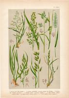 Magyar növények 4, litográfia 1903, színes nyomat, virág, perje, fésű-fű, rozsnok, harmatkása (3)