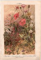 Növények (8), litográfia 1904, színes nyomat, magyar, természetrajz, növény, kender, mezei boglárka