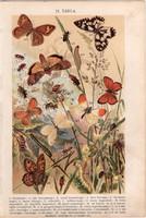 Bogár, pillangó, hernyó (11), litográfia 1904, színes nyomat, magyar, természetrajz, állat, lepke