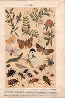 Bogarak, növények (6), litográfia 1904, színes nyomat, magyar, természetrajz, bogár, lucerna, állat
