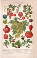Bogyós gyümölcsök, litográfia 1892, színes nyomat, német nyelvű, gyümölcs, szőlő, szeder, eper
