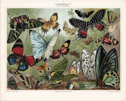 Pillangók II. (3), 1908, színes nyomat, német nyelvű, eredeti, régi, lepke, pillangó, egzotikus